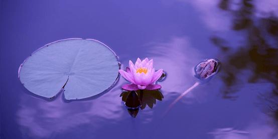 Lillypad-Pond-IMG